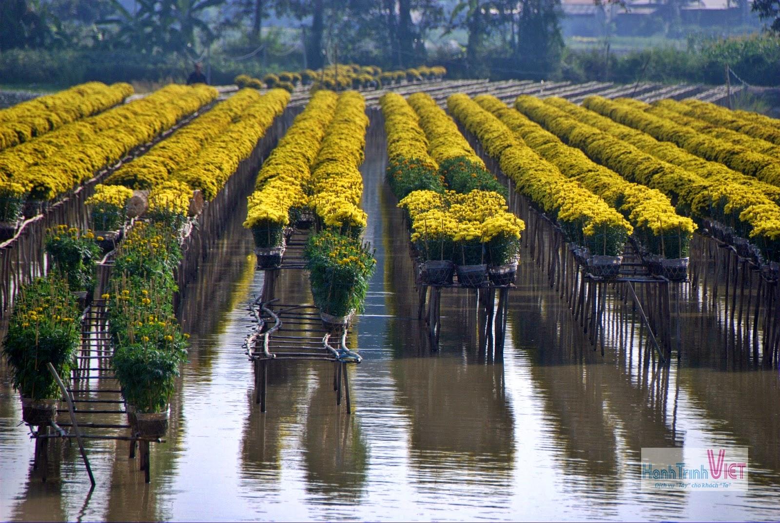 Độc đáo bức tranh hoa ở làng hoa Sa Đéc