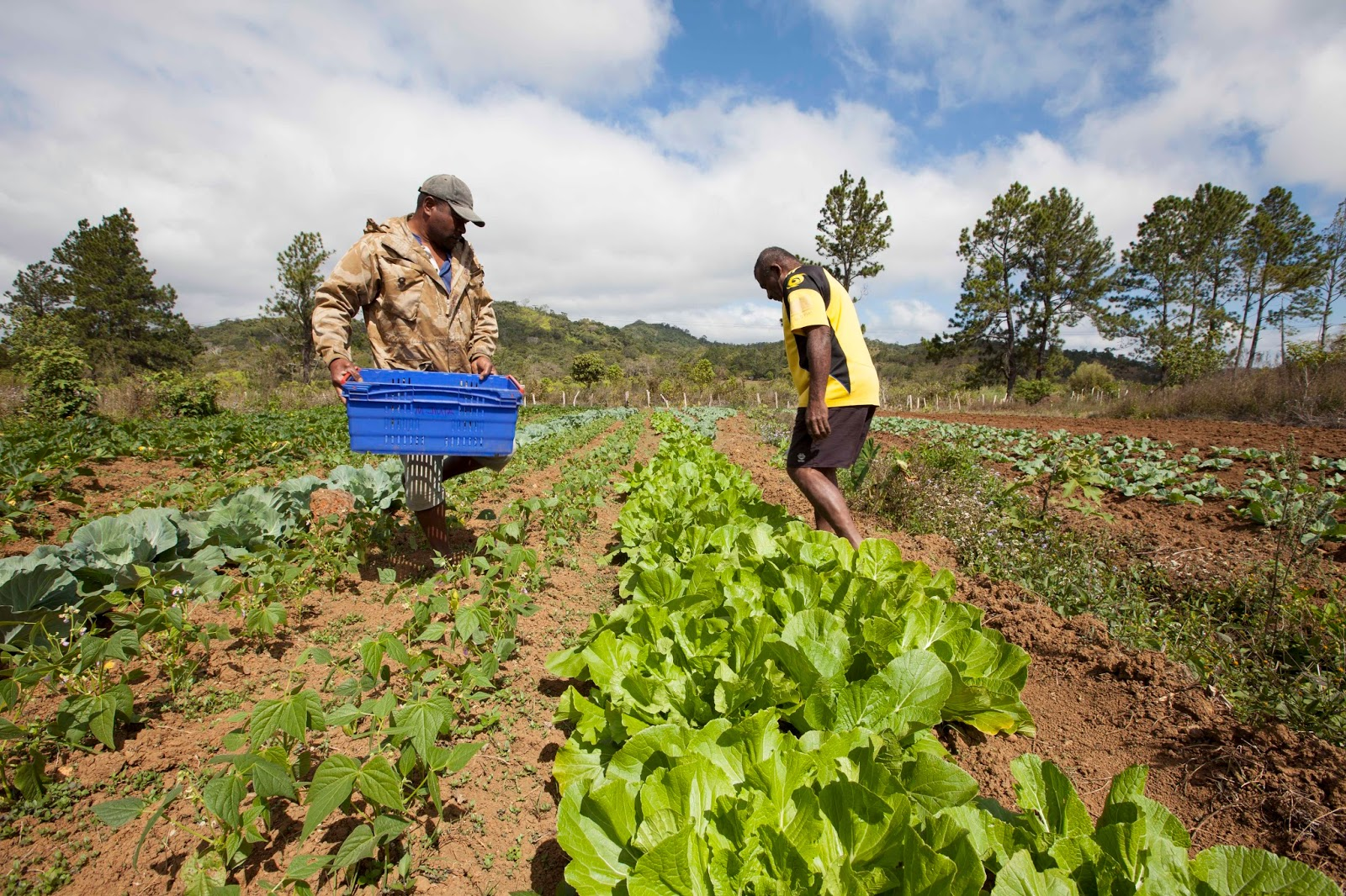 Growing food tapping into new markets a photo blogpost for African crops and slave cuisine