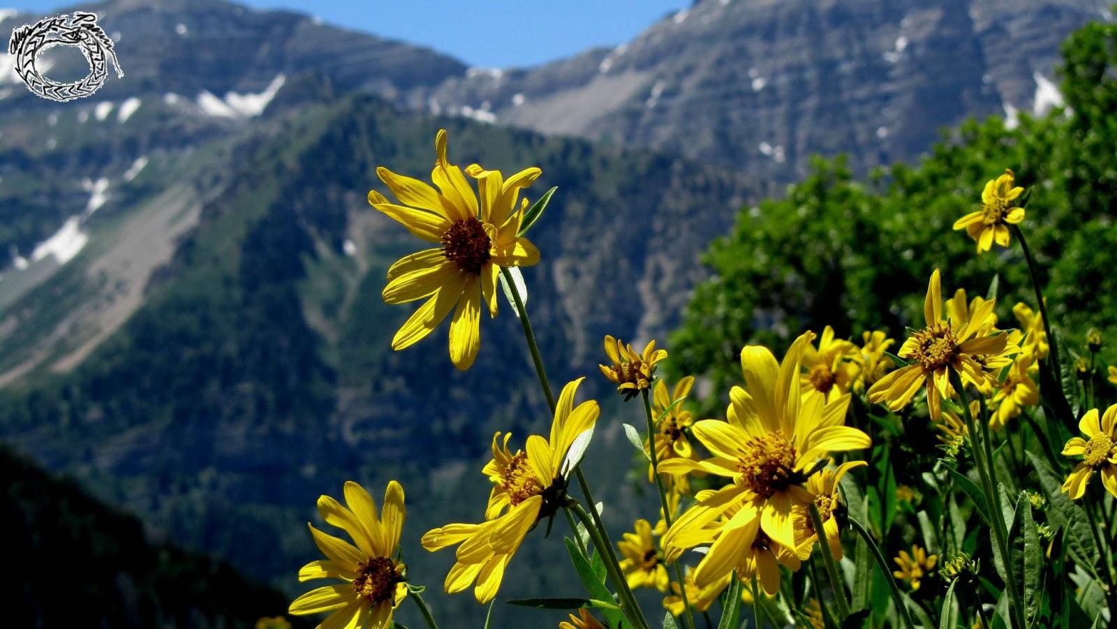 Al s Writing Block Travel Utah State Route 92 Alpine Loop