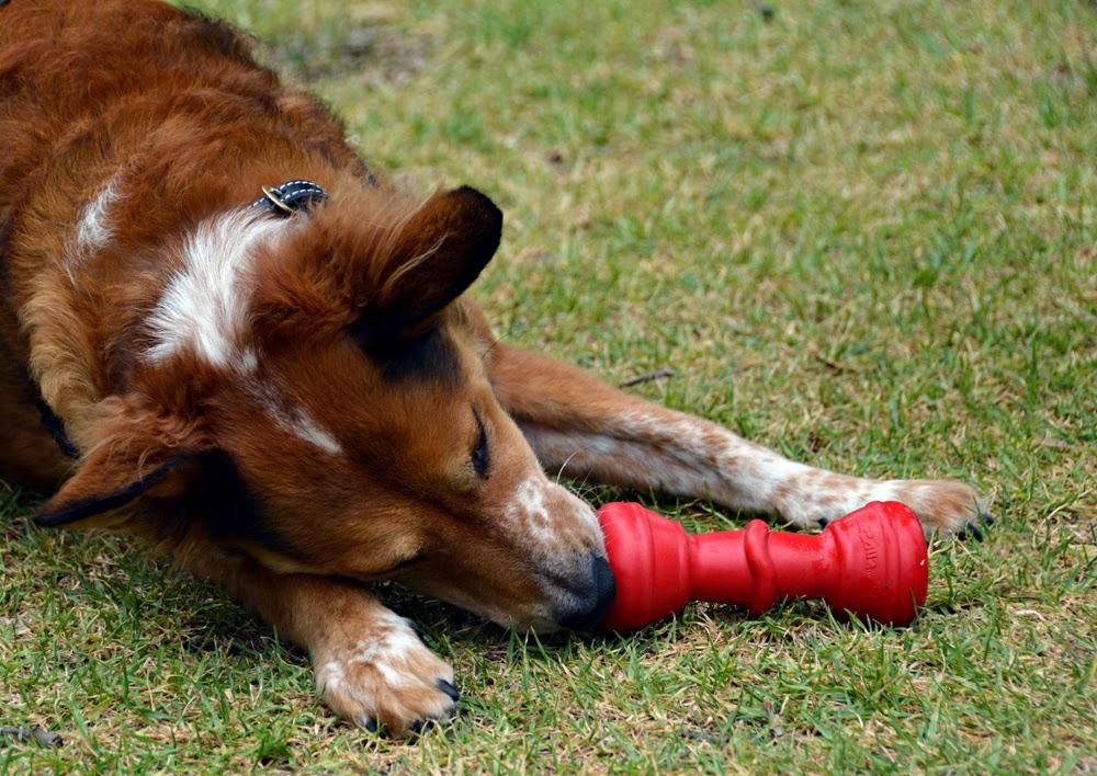 Dog Toy Companies In U S