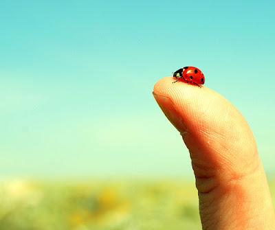hình ảnh bọ rùa đẹp
