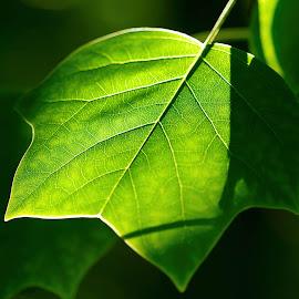 wallpaper daun pohon