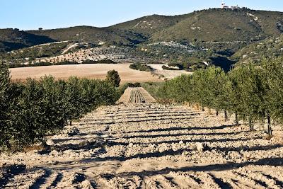 Sierra de Gibalbín
