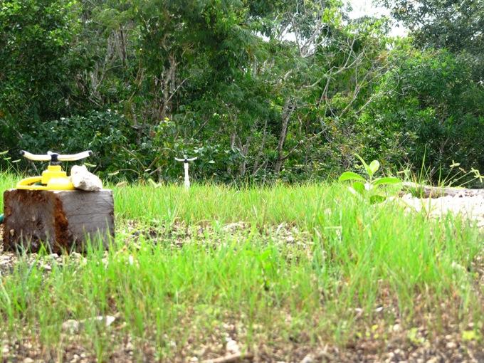 sistemas de riego para jardines en la azotea