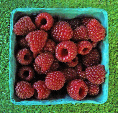 Basket of Ripe Raspberries