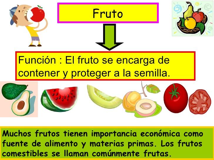 La semilla y el fruto ~ Con-CIENCIA