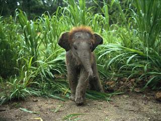 Foto Bayi Gajah Lucu