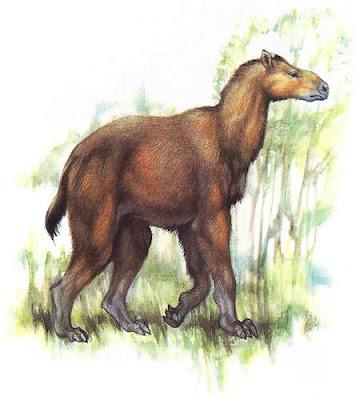 chalicotheridae Moropus