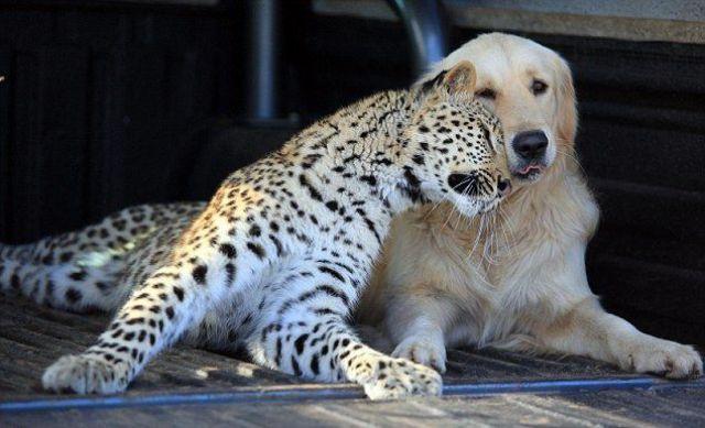 (foto-foto) Menariknya Dunia Binatang [ www.BlogApaAja.com ]