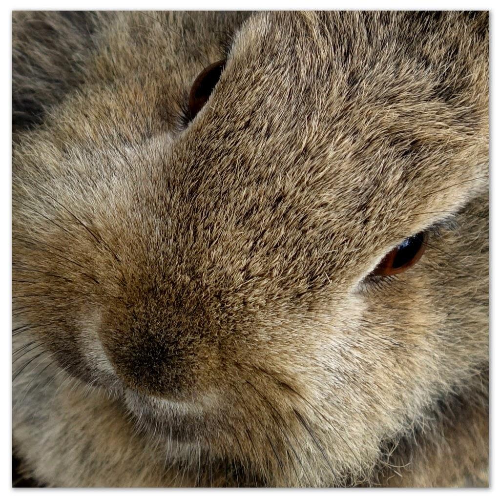 ons konijn © ludo rutten