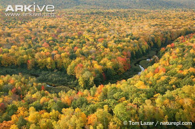 an overview of the deciduous forest An overview is presented of the phenological models relevant for boreal coniferous, temperate-zone deciduous and mediterranean coniferous forest ecosystems the phenology of the boreal forests is.