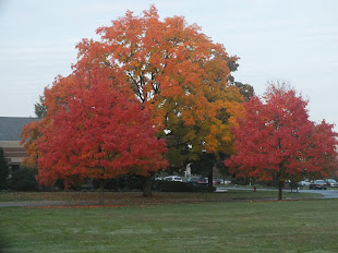 Fall Color In Elizabethtown PA