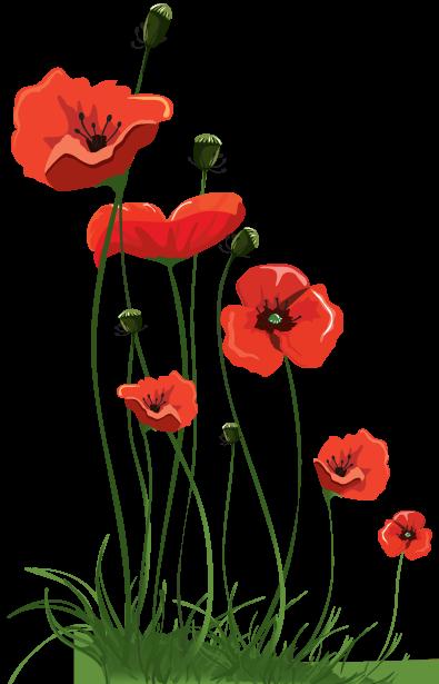 Hi spirits mr hobbys poppies a garden poem mr hobbys poppies mightylinksfo