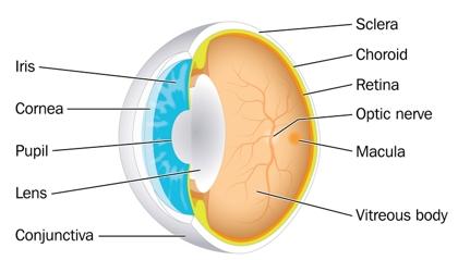 Bagian-bagaian Mata Dan Fungsinya