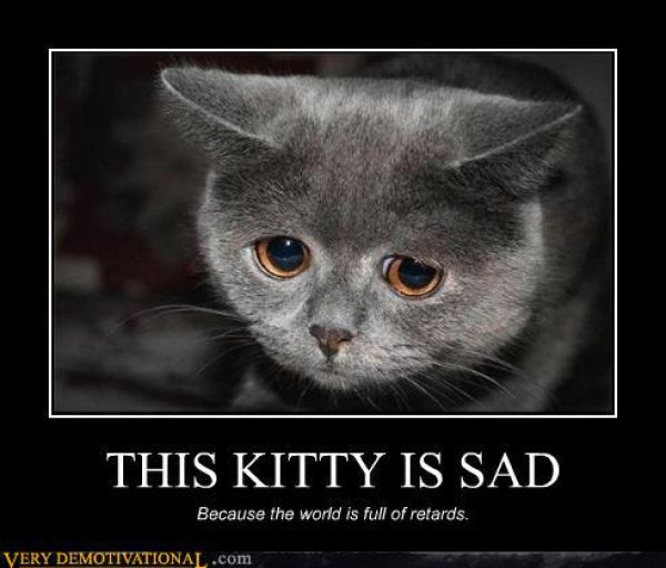 Sad Cat Meme
