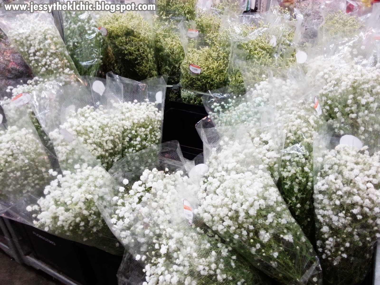 Baby Breath Rm20 80 Per Pack