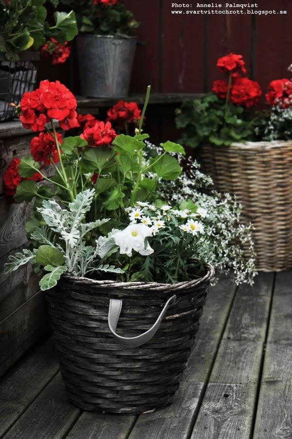 korg med läderhandtag, korgar från loppis, loppisen, korgar, korgarna, blommor, altan, altanen, balkong