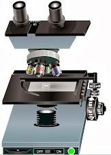 Mira amb el microscopi virtual