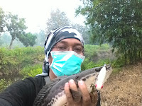Mancing Ikan Toman