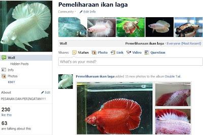 Tips Memelihara Ikan Laga