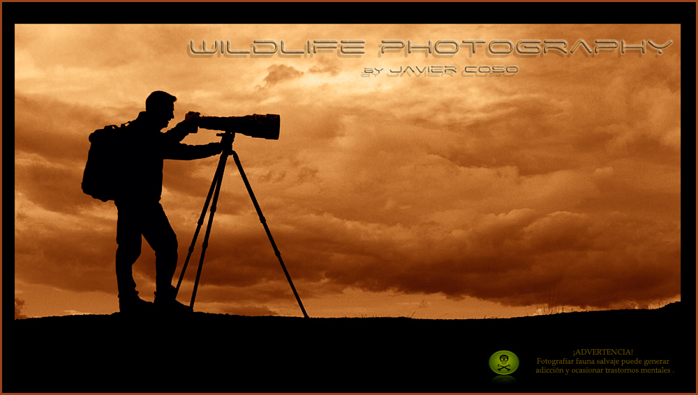 Wildlife Photography by Javier Coso