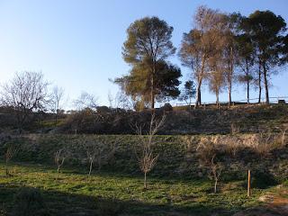 Parque de Valdegurriana árbol arrancado viento Zaragoza