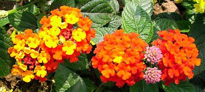 Các loài hoa đẹp 05