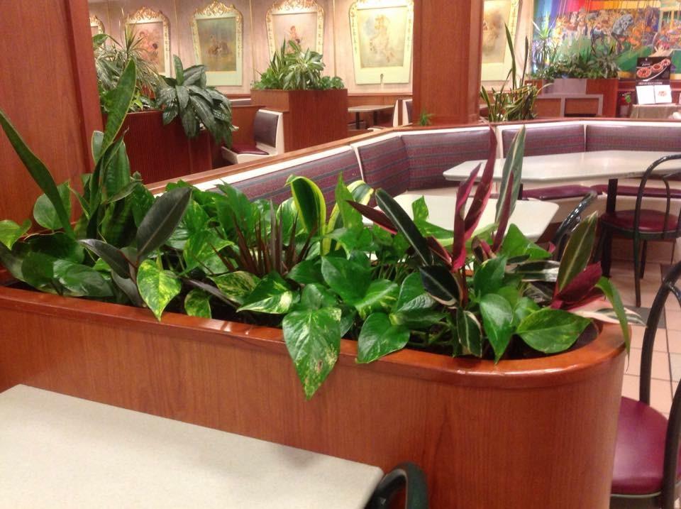 Pdi plants low light interior green at kelly