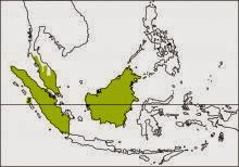 writhed hornbill Rhabdotorrhinus leucocephalus