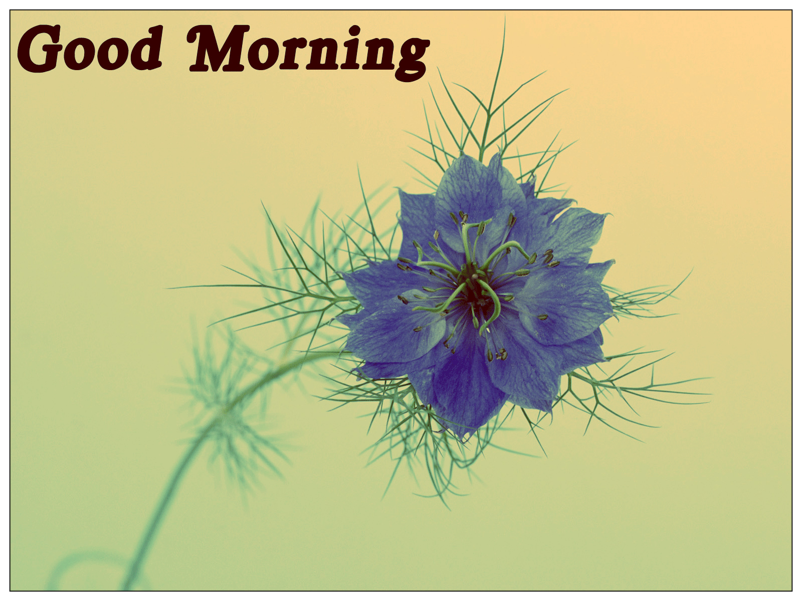 Khushi For Life Simple Good Morning Cards Cute Morning Wishes Pics