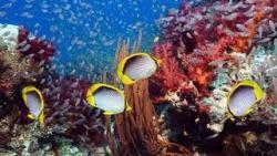 sfondi mare e pesci 17