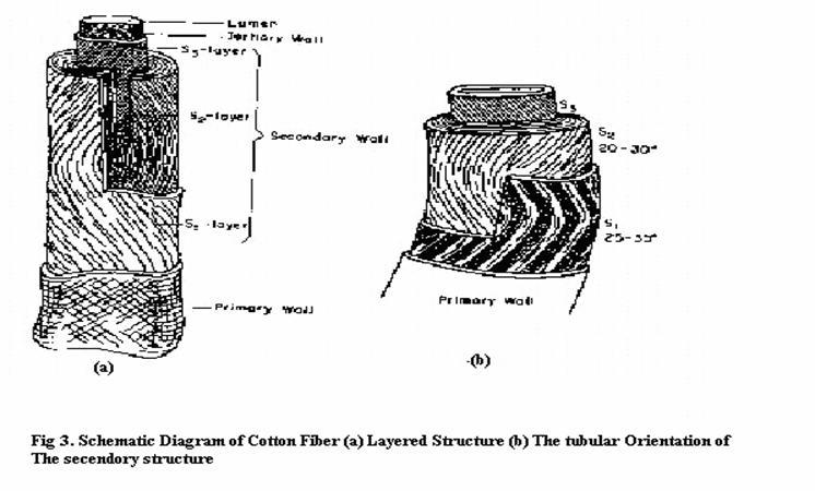 cotton fibre details