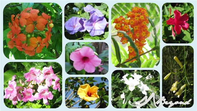 lake sebu flowers, flowers at punta isla lake resort, punta isla resort, punta isla accommodation