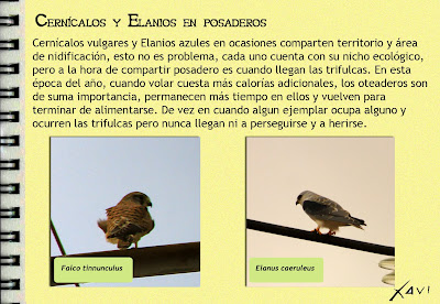 Cuadernos de campo Javier Pérez