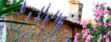 Lavender and friends