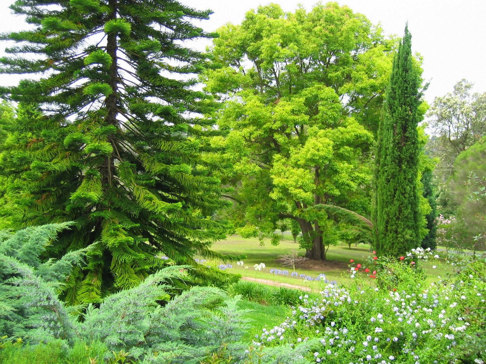 Geniaus a deciduous tree for Garden deciduous trees