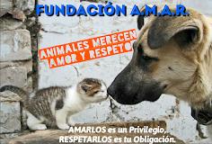 Todos los Animales Merecen Amor y Respeto