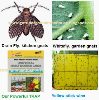How To Get Rid Of Fly Infestation Naturally