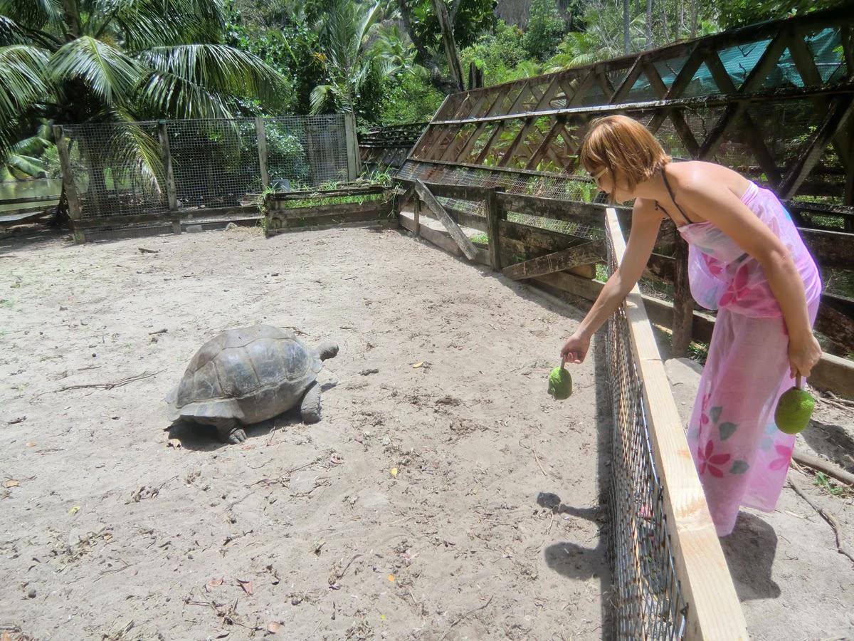 Черепахи-на-Сейшелах