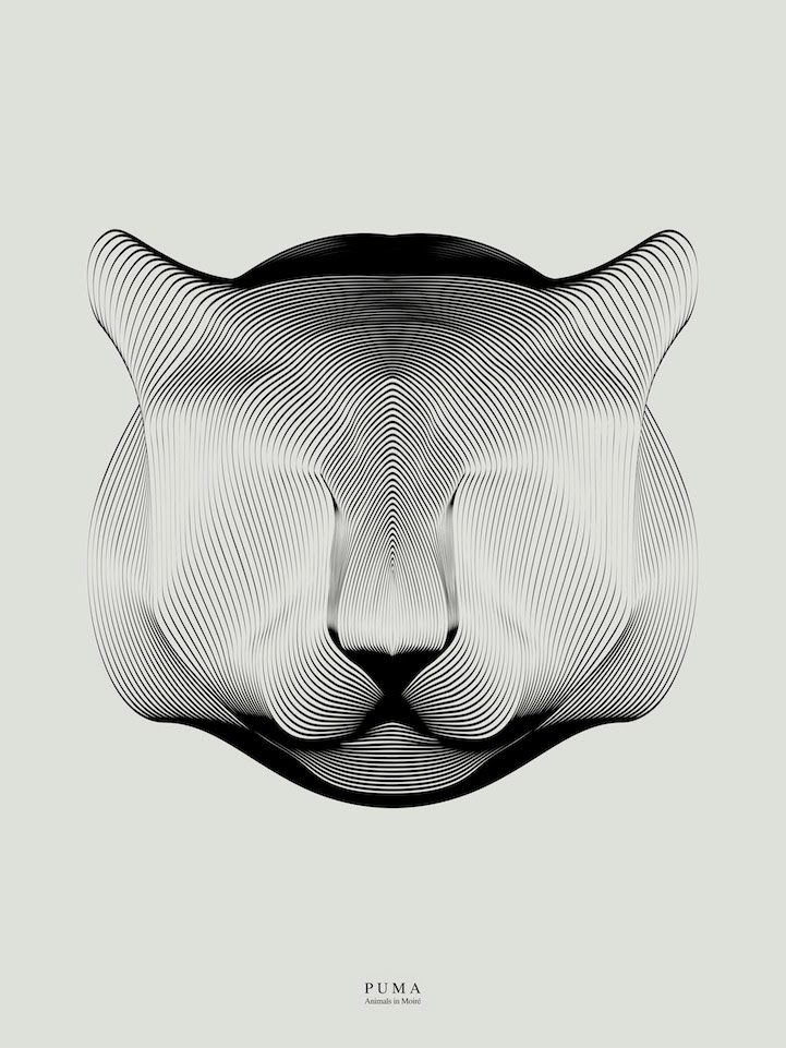 Andrea Minini's Animal Illustrations
