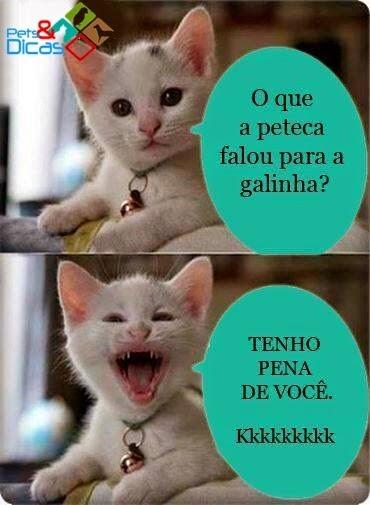 Fotos de piadas de gatinho para postar no Facebook