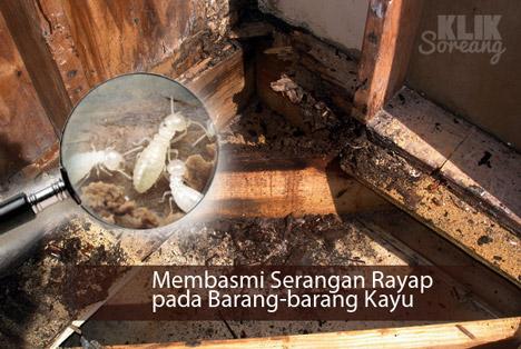 Membasmi Serangan Rayap pada Barang-barang Kayu