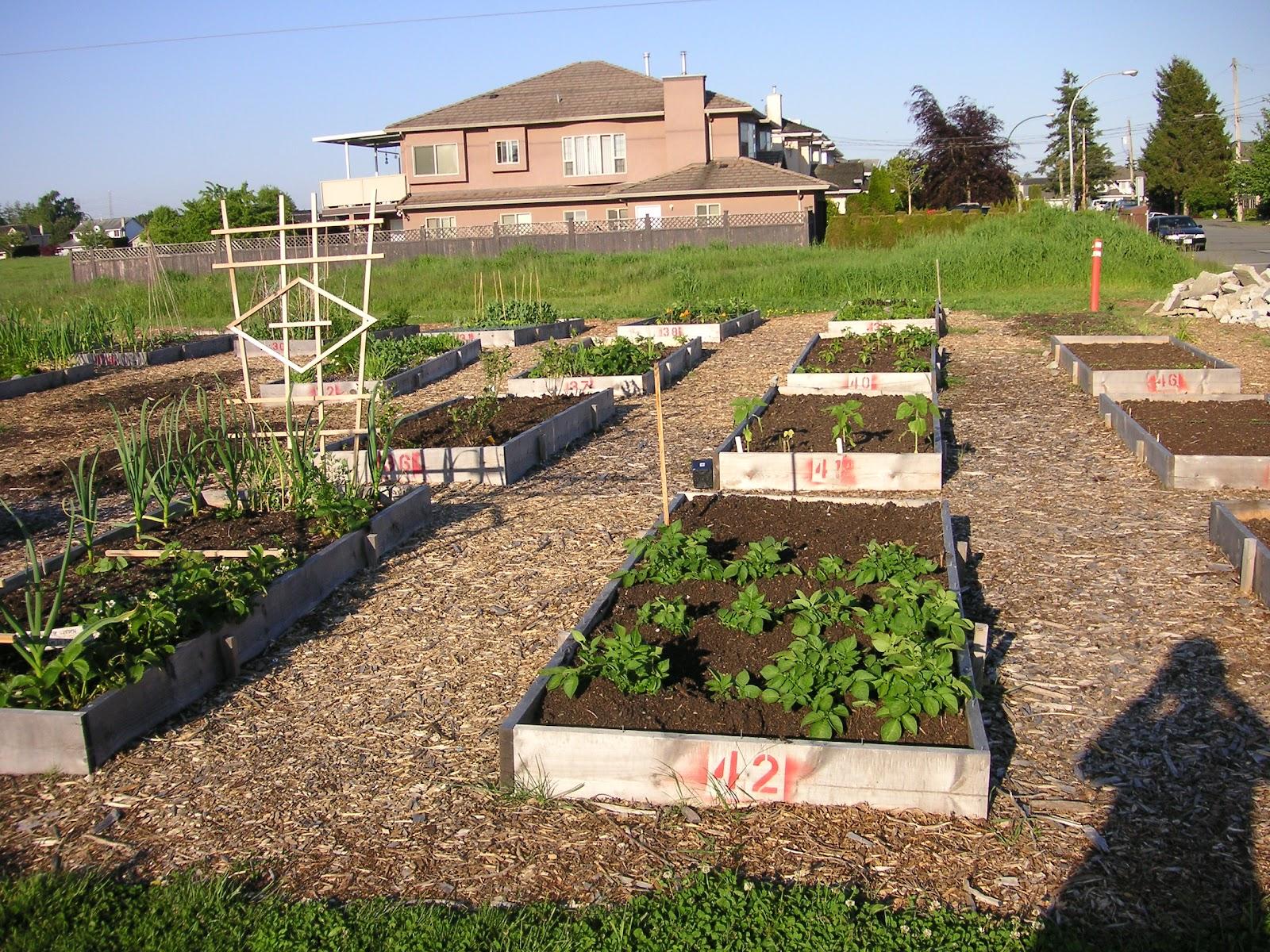 Ladner Community Garden: May 2012