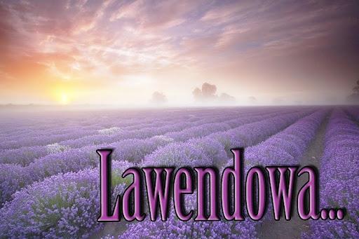 Lawendowa Galeria
