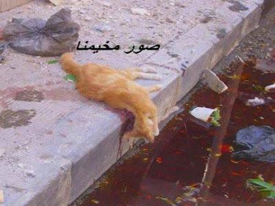 Kucing yang dibunuh oleh Bashar Al Assad