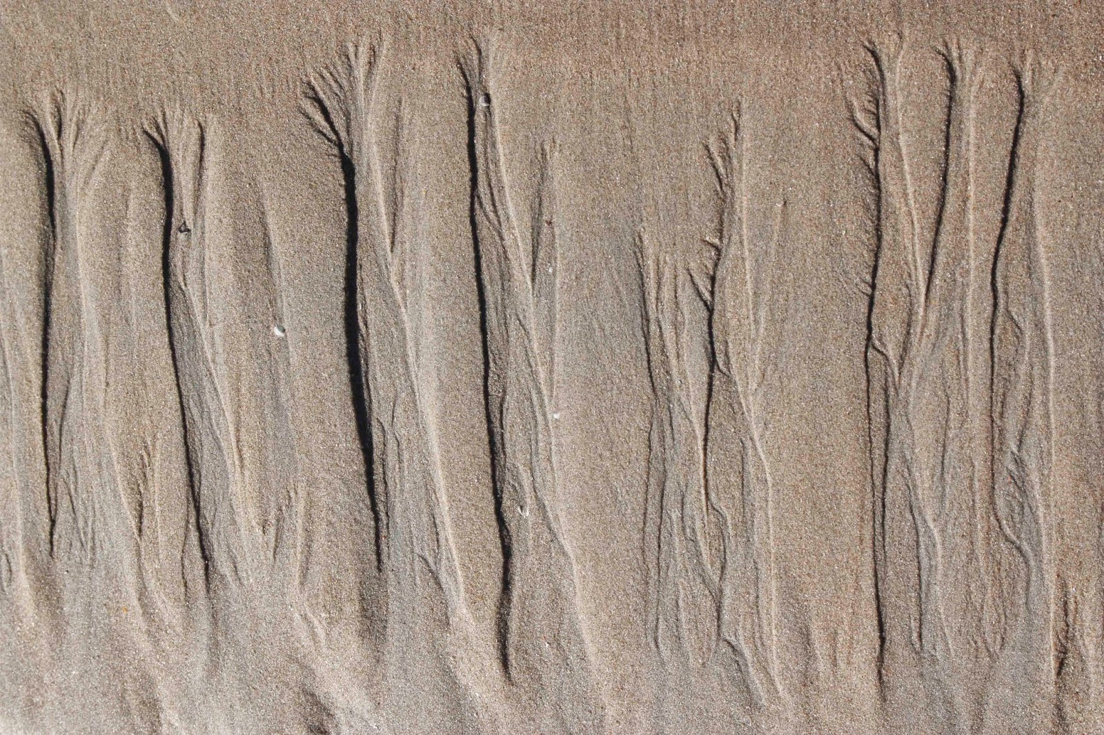trees in sand