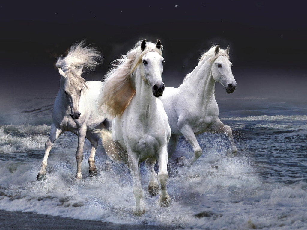 Download   Wallpaper Horse Country - Horses+sea  Snapshot_8310098.jpg