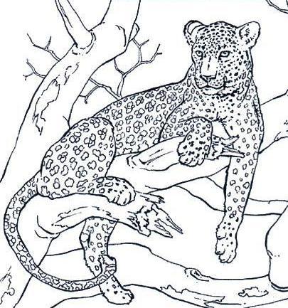 Dibujo para colorear de yaguarete  Imagui