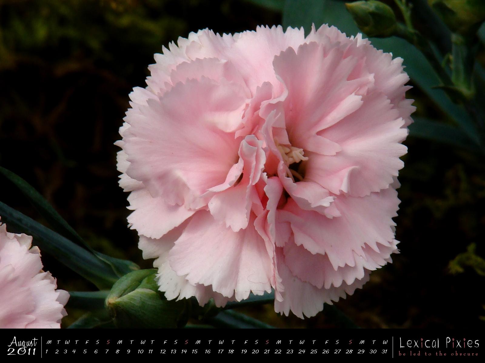 http://1.bp.blogspot.com/-rrBjDyCoOJ8/TjZQspd5-pI/AAAAAAAADxE/kgezOhG3PFY/s1600/08_calendar_2011_flower_aug.jpg