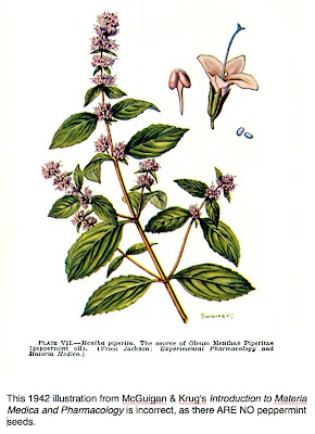 the peppermint mentha piperita history essay Garland, sm and menary, rc and davies, nw, dissipation of propiconazole and tebuconazole in peppermint crops (mentha piperita (labiatae)) and their residues in.